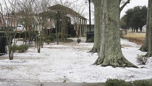 UNUSUAL SIGHT: Sleet, with a mixture of snow, gathered under these oak trees at the Shay Engine Park on U.S. Highway 11. Such sights are rare here in the Deep South and while pretty, often mean trouble on our roads, streets and highways. Photo by Will Sullivan