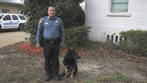 GOOD DOG: Alik, one of the sheriff department's K-9 officers, has retired for health reasons. He will live with his former handler, Cpl. Ashley Lambert and his family.  Photo by Alexandra Hedrick